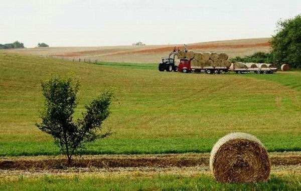 现代农业让城市更美好——党的十八大以来都市现代农业发展综述