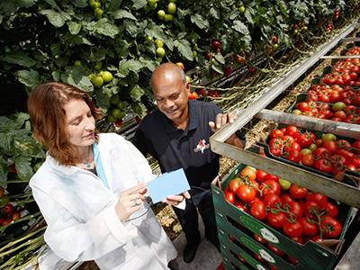 温室技术助力荷兰做强农业