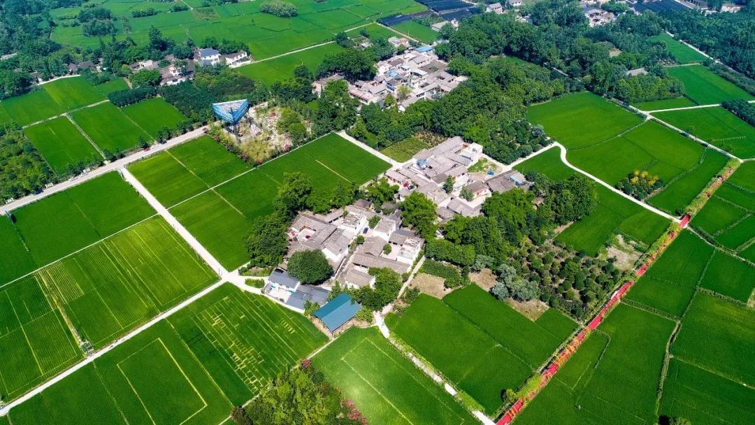 区农业农村局扎实推进都市现代农业产业生态圈建设