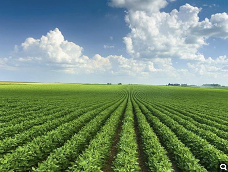 政策速递 | 农业农村部公布2020年28个重点农业扶持项目