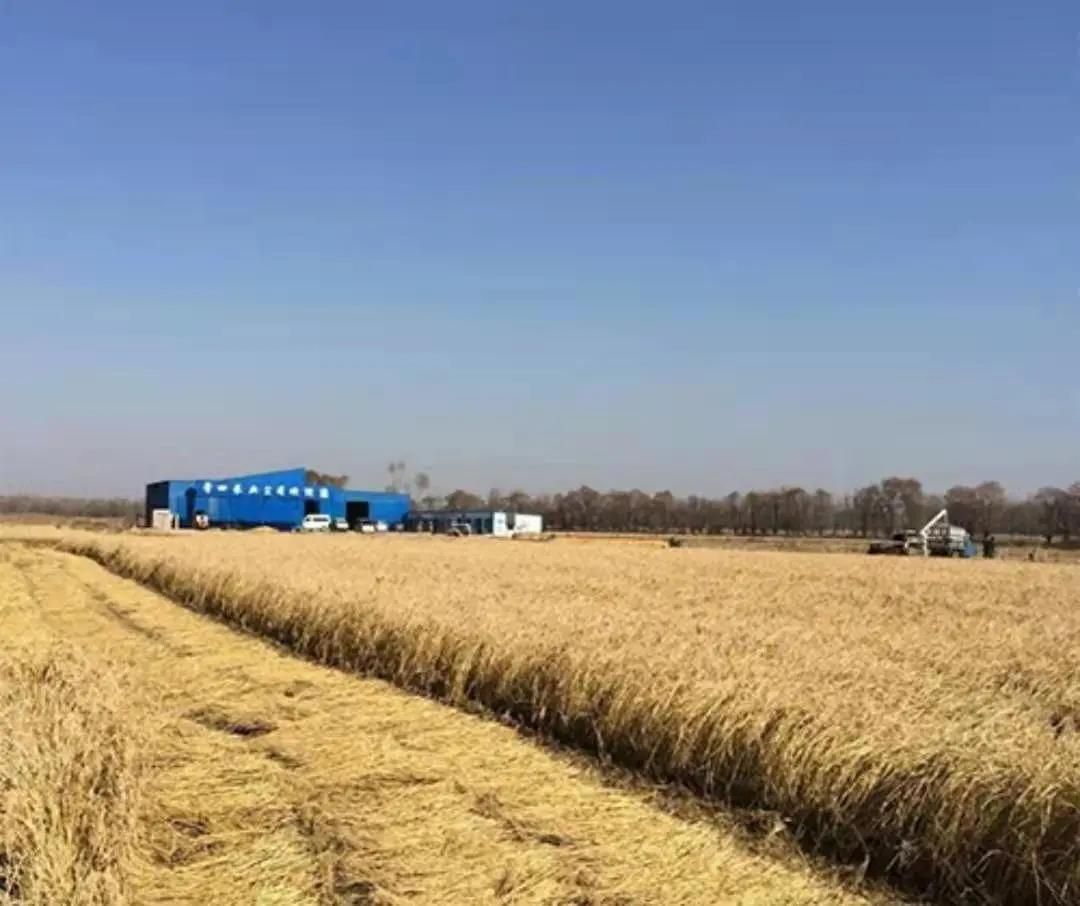 第一批全国家庭农场典型案例:陕西榆林市榆阳区四娃圆梦家庭农场
