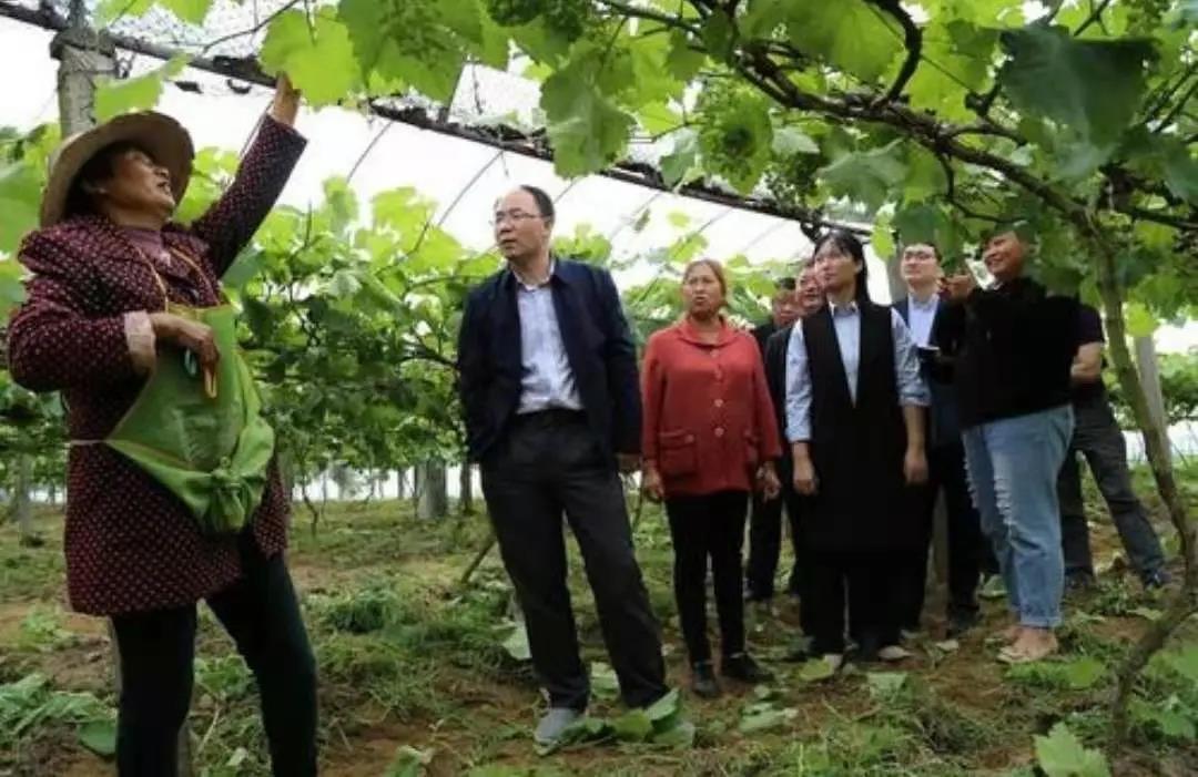 第一批全国家庭农场典型案例:重庆涪陵区洪家大院家庭农场