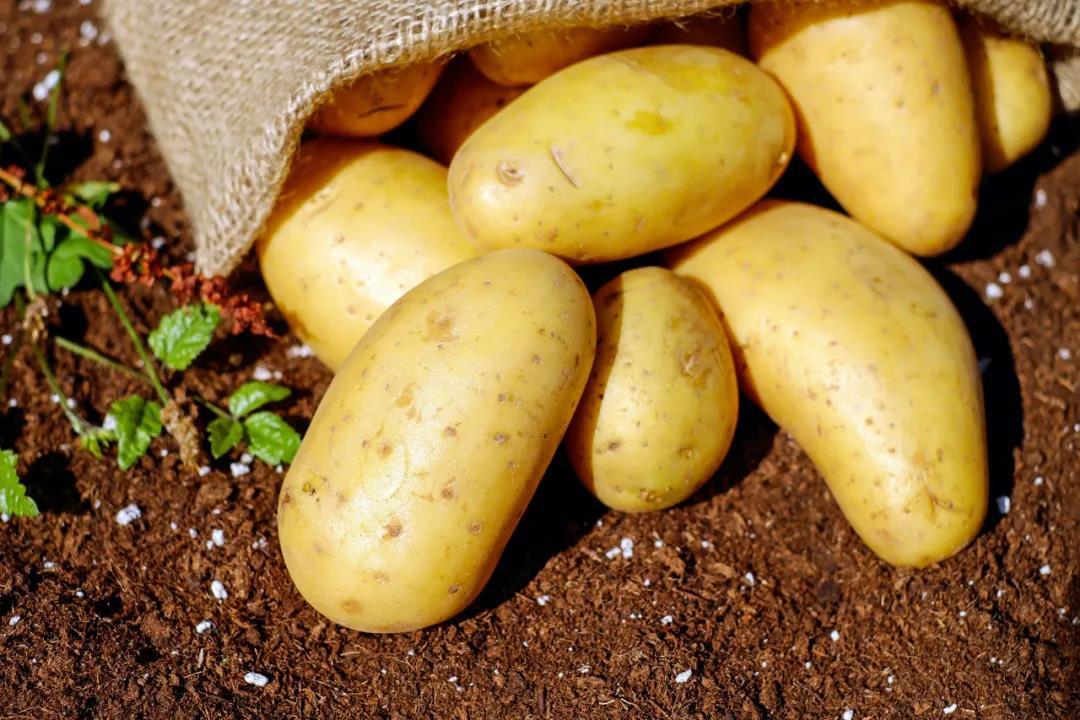 乡村振兴典型案例——甘肃定西  打造全产业链 实现马铃薯产业高质高效发展